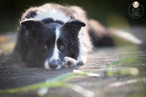 Hundefotografie mit Wau-Effekt