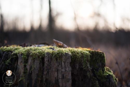 Naturfotografie mit Wau-Effekt