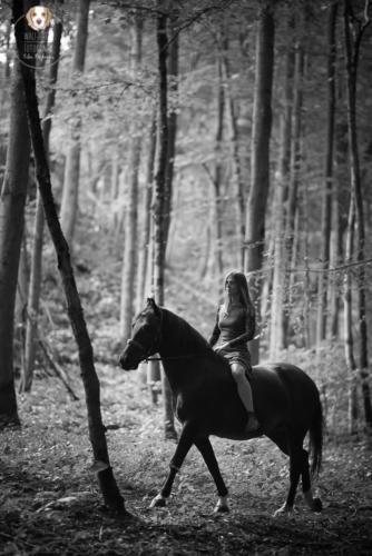 Pferdefotografie mit Wau-Effekt