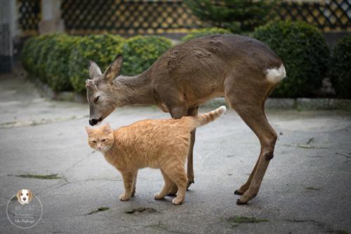 Tierfotografie mit Wau-Effekt